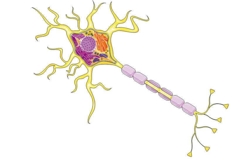 Detalhes internos de neurônios.