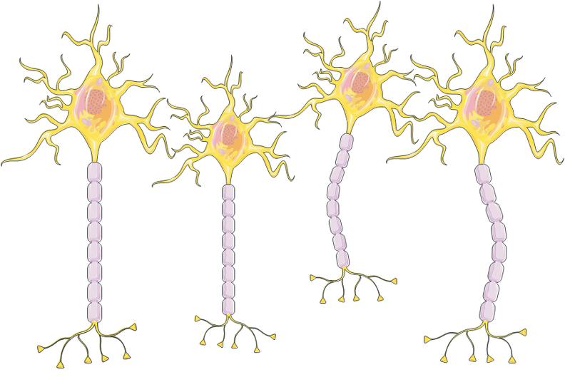 Estrutura de neurônios.