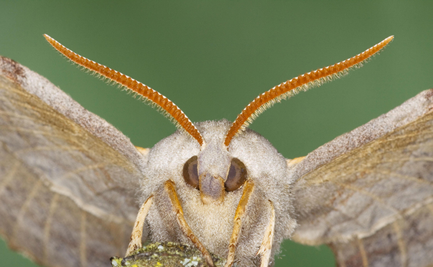Mariposa gigante.
