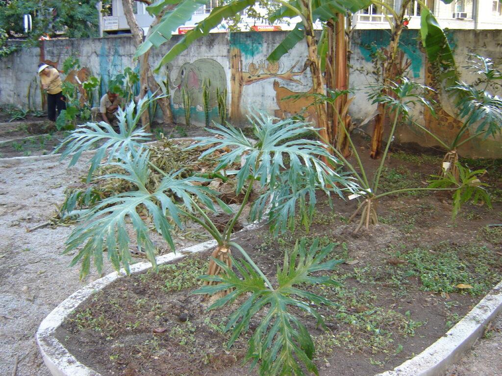 Plantio de plantas no Jardim Didático, 2006.