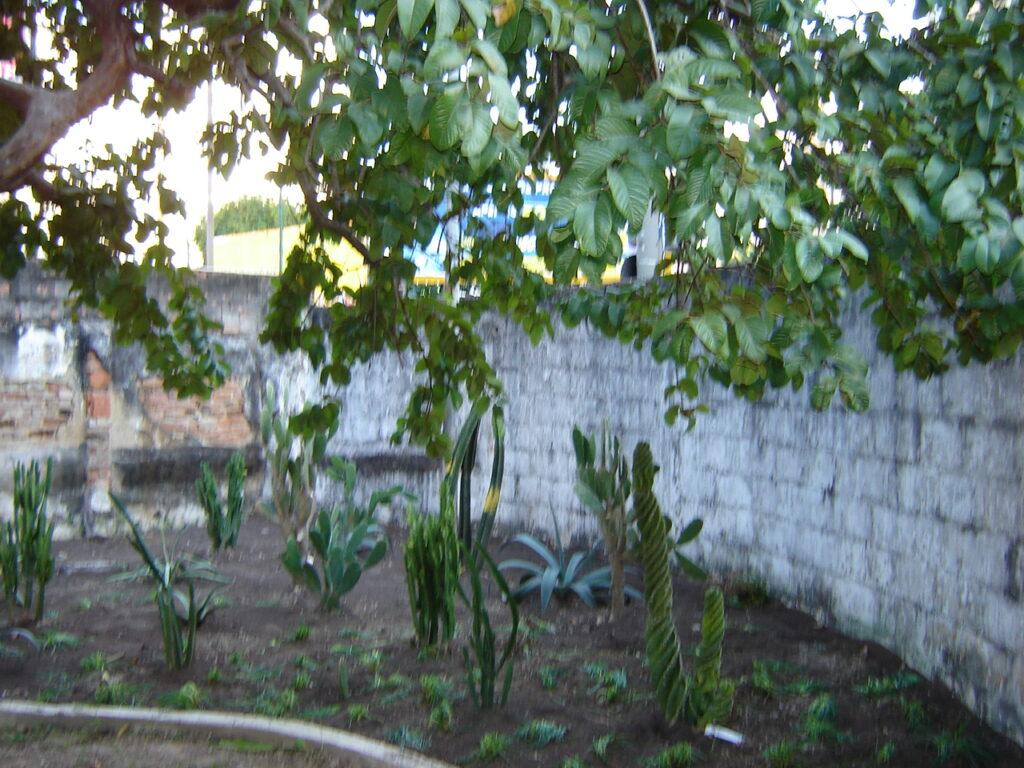 Criação do Jardim Didático, 2006.